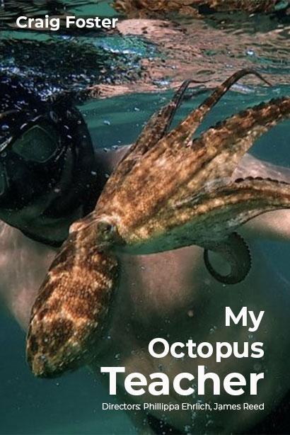 My Octopus Teacher | Netflix (2020) บทเรียนจากปลาหมึก
